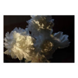 Bouquet of White Peonies Poster