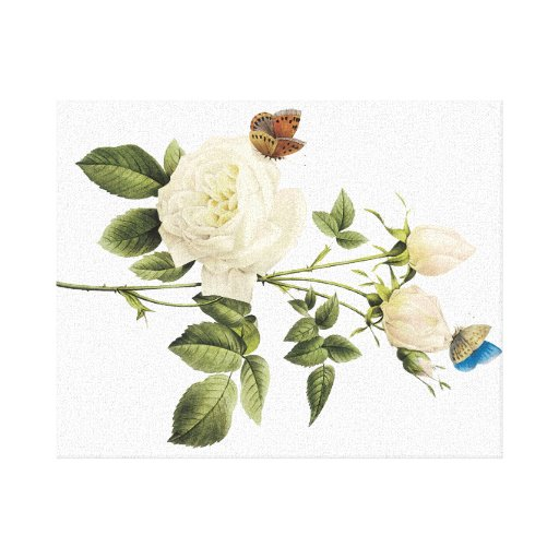 Bouquet of White Roses with Butterflies Canvas Gallery Wrap Canvas