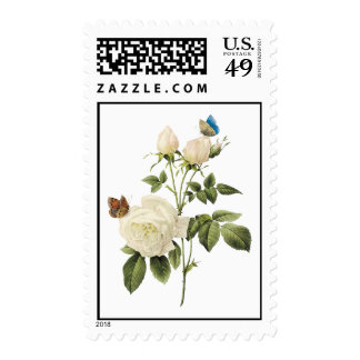 Bouquet of White Roses with Butterflies Postage