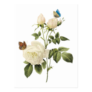 Bouquet of White Roses with Butterflies Postcard