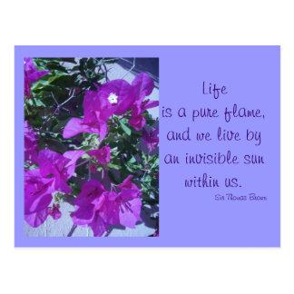 Bourgainvillea púrpura tarjeta postal