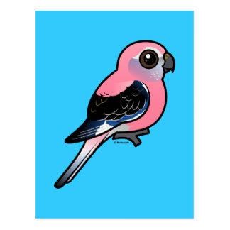 Bourke's Parakeet Postcard