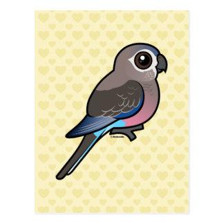 Bourke's Parrot Postcard