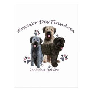 Bouvier Des Flandres Can't Have Just One Postcard