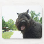 Bouvier Surfing the Web Mouse Pad