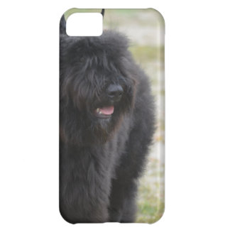 Bouviers des Flanders Cover For iPhone 5C