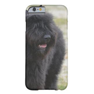 Bouviers des Flanders iPhone 6 Case