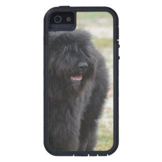 Bouviers des Flanders iPhone 5 Case