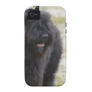 Bouviers des Flanders Vibe iPhone 4 Cases