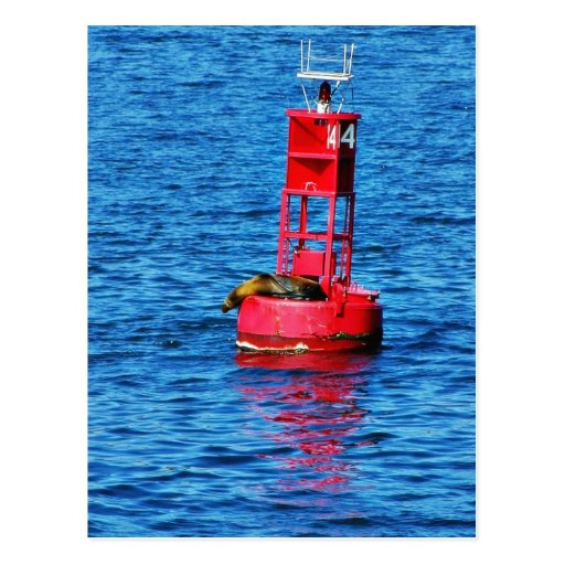 Bouy In San Diego Bay With A Seal On It Postcards