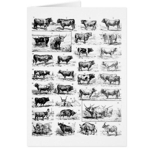 Bovine Chart Greeting Cards