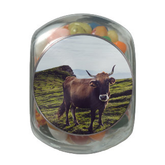 Bovine Cow on Beautiful Landscape Jelly Belly Candy Jars