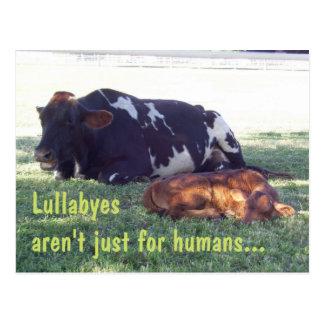 Bovine Lullaby Postcard