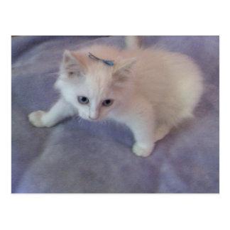bow in hair kitten postcard
