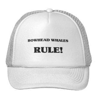 Bowhead Whales Rule Trucker Hat