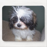 Bowie the Fuzzy Shih Tzu Puppy 2 Mousepad