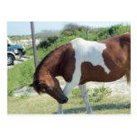 Bowing Horse Post Card