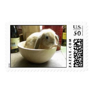 Bowl Bunny Postage