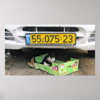 Box Cat 1 Print