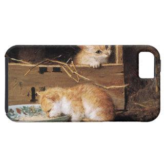 Box cat iPhone SE/5/5s case