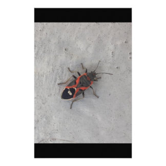 Box Elder Beetle Stationery