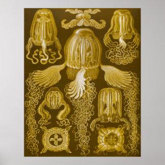 Box Jellyfish Poster