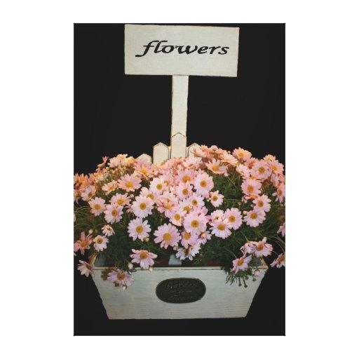 Box of daisies canvas print
