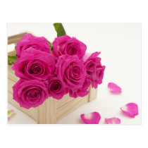Box of Red Roses Postcard