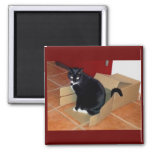 Box Time Lucy Refrigerator Magnet