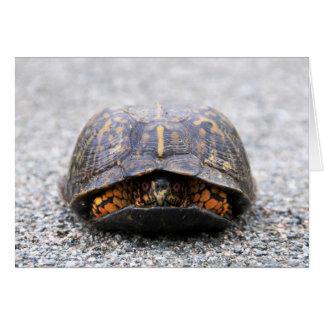 Box Turtle Cards