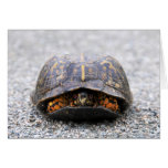 Box Turtle Cards