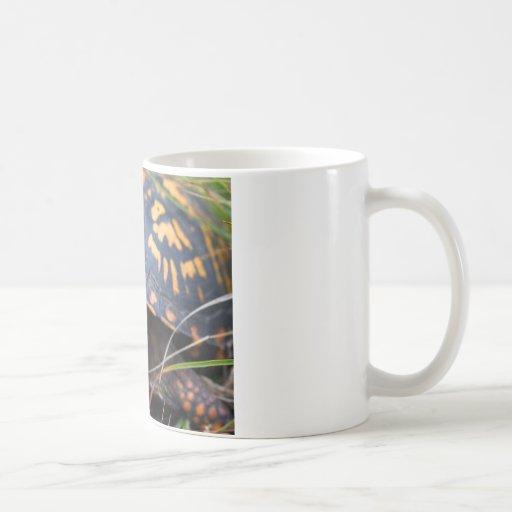 Box Turtle Coffee Mugs