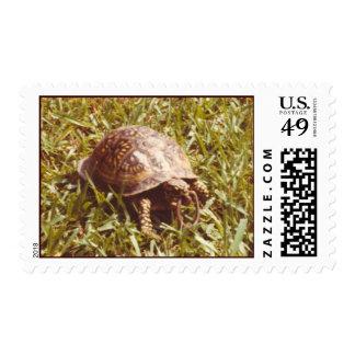 Box Turtle eating worm Postage Stamp