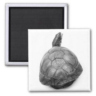 Box Turtle in Black and White 2 Inch Square Magnet