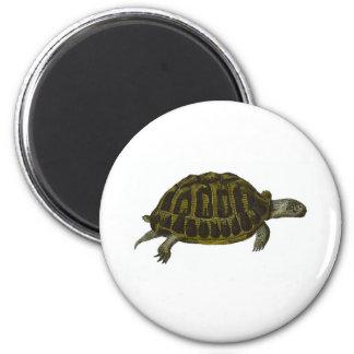 Box Turtle Magnet