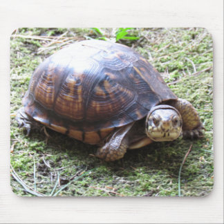 Box Turtle - Mossy Path Mouse Pad