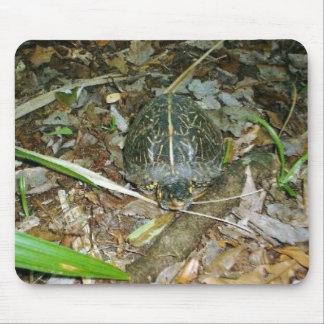 Box Turtle Mouse Pad