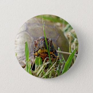 Box Turtle Pinback Button