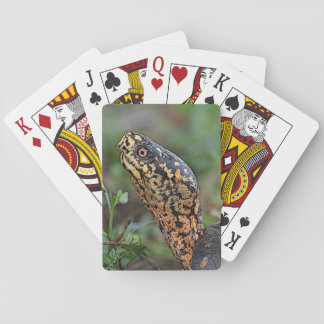 Box Turtle Playing Cards