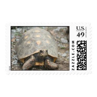 Box Turtle Postage Stamp