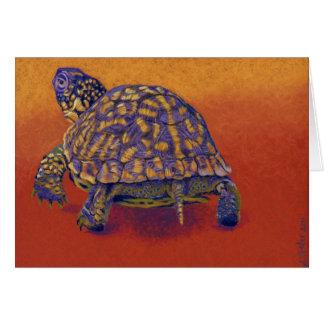 Box Turtle, tortoise Card