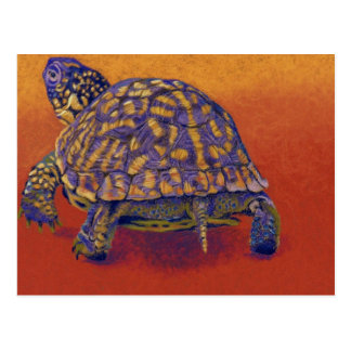 Box Turtle, tortoise Postcard