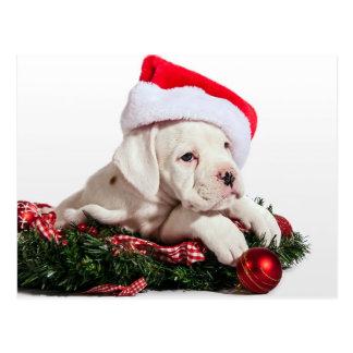 boxeador pequeño cachorro, boxeadores little/puppy tarjetas postales