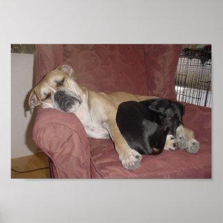 Boxeador y Dachshund dormidos en una silla Póster