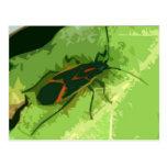 Boxelder Bug Postcard