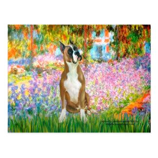 Boxer 1cr - Garden Postcard