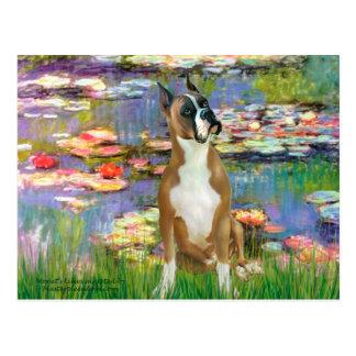Boxer 1cr - Lilies 2 Postcard
