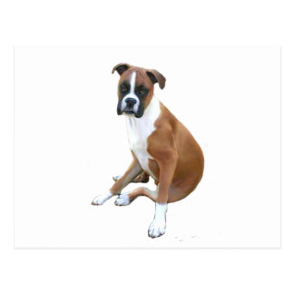 Boxer (A) - natural ears Post Cards
