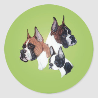 Boxer and Boston Bully Head Studies Classic Round Sticker