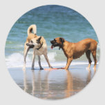 Boxer and Pal - Was that a Dolphin? Round Stickers